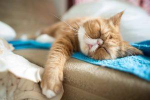 cat sleeps, how to avoid Keto diet