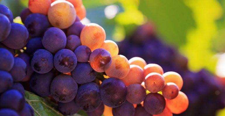 ТОП 11 слабительных продуктов. Как ускорить пищеварение?