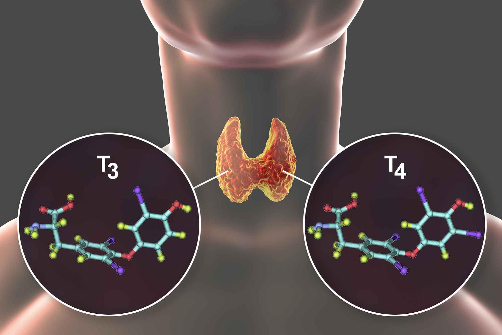 Щитовидная железа на кето - гормоны Т3 и Т4.